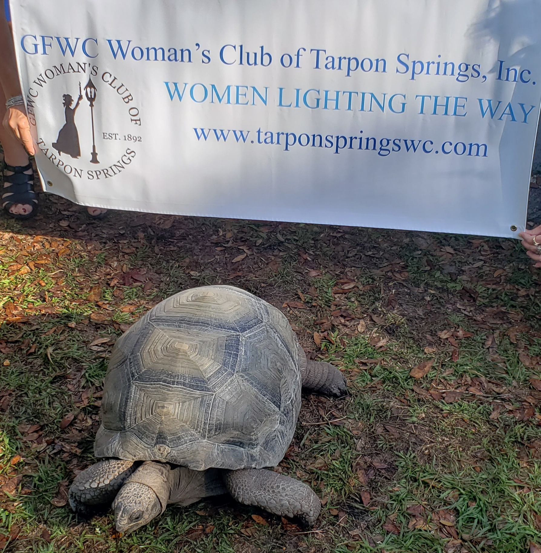 Pebbles, the 25 lb. Aldabra tortoise that our Club adopted from the Tarpon Springs Aquarium & Animal Sanctuary.